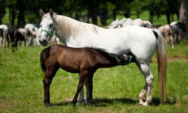 New Way to Detect Failure of Passive Transfer in Foals