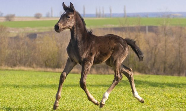 Do Foals Need Exercise for Bone Growth?
