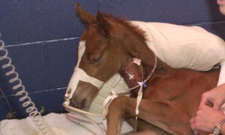 Equine Immunodeficiencies Reviewed