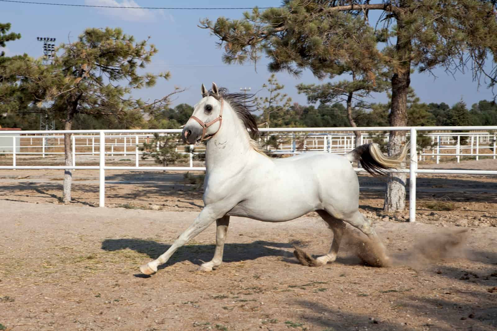 Separation Anxiety in Horses
