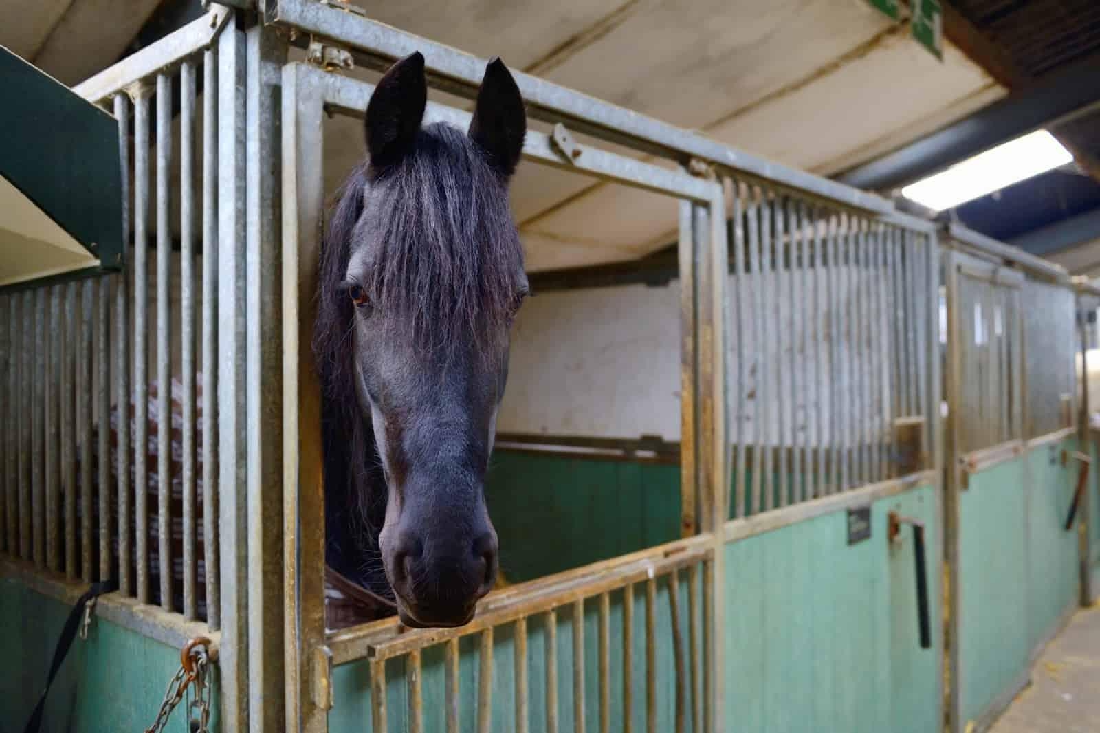 are horses optimistic or pessimistic