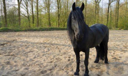 Is Your Horse's Water Bucket Half Full or Half Empty?