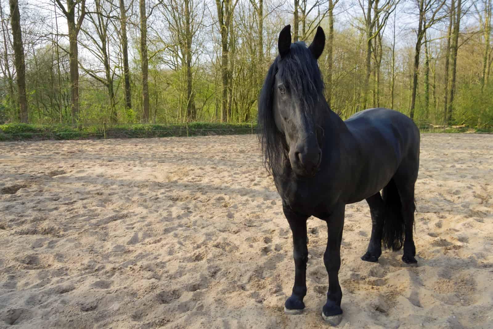 How Researchers Judge Horses' Temperaments