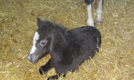 Researchers Produce First European Foals from Frozen Embryos
