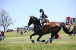 equine heart; Nutrition for Optimum Equine Performance