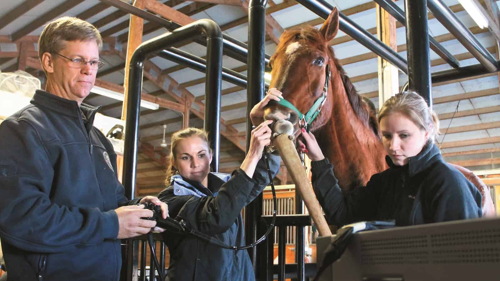 Veterinarians Discuss Gastric Ulcer Treatment Strategies for Horses
