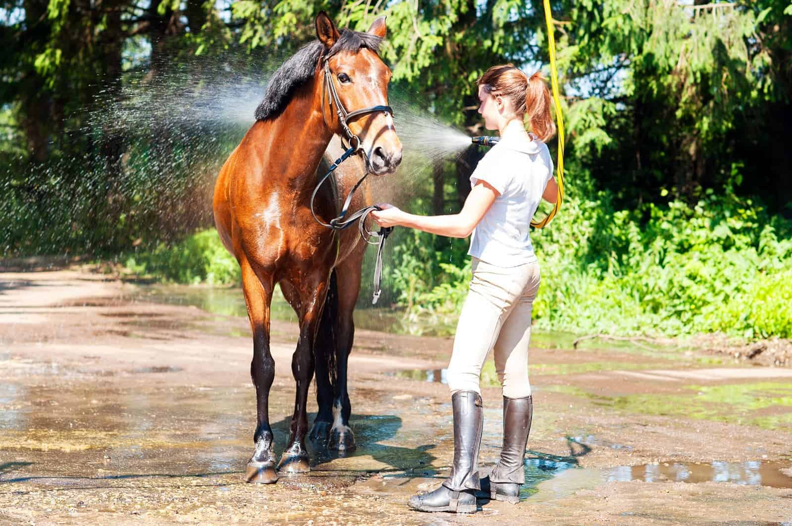 10 Hot Weather Horse Care Tips