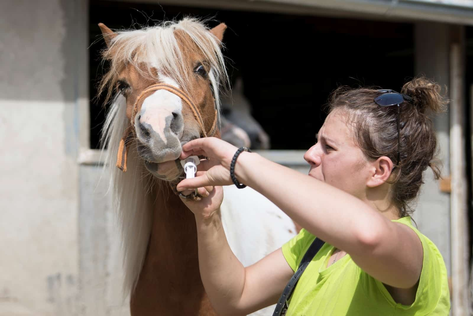 Use Caution When Giving Horses Bute, Omeprazole Together
