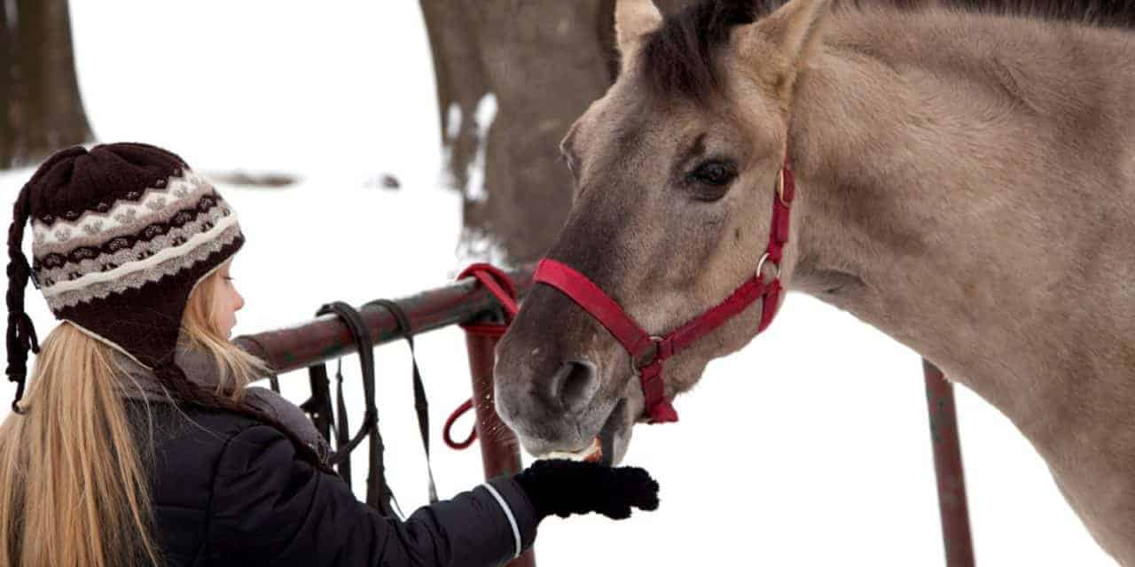 Adopting a Horse This Holiday Season? Rescuers Share Tips