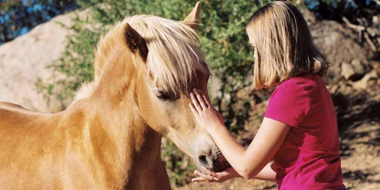 Study: Food Rewards Can Improve Horse Training