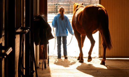Should I Close My Horse in the Barn During Winter?