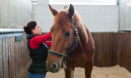 Can Horses Tell Us If They're Happy, Have Good Welfare?