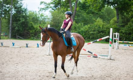Is Your Horse Ready to Learn?