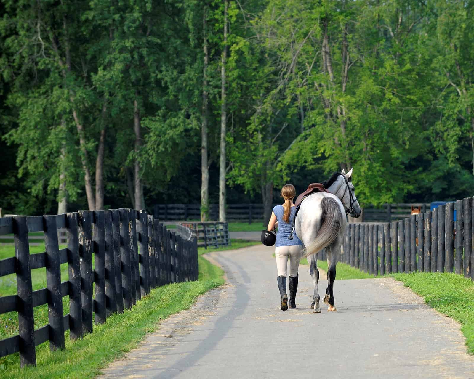 Thoroughbred Aftercare Alliance Accredits 34 Organizations