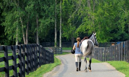 10 Retired Racehorse Resources on TheHorse.com