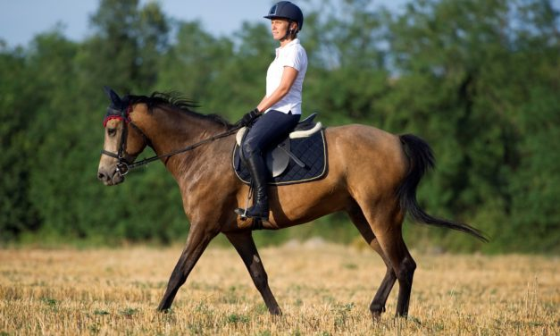 10 Equine Rehabilitation and Reconditioning Resources
