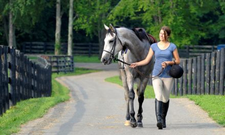 Study Looks at Racehorses' Transitions to Second Careers