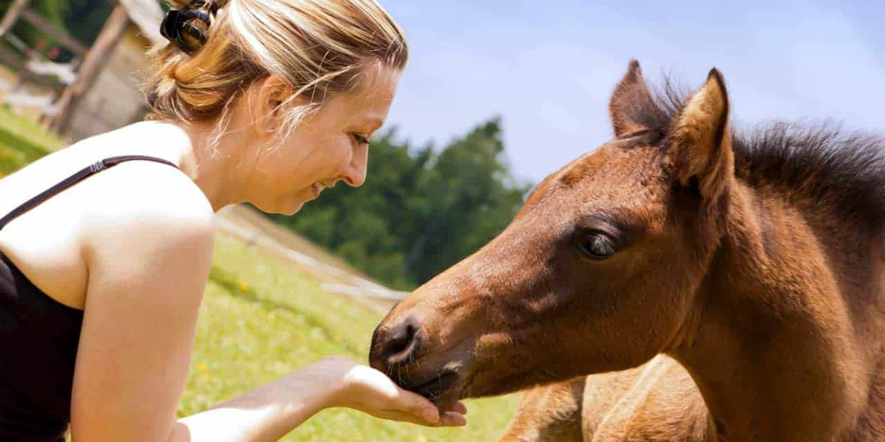 Study: Dams Shape Foals' Relationships With Humans