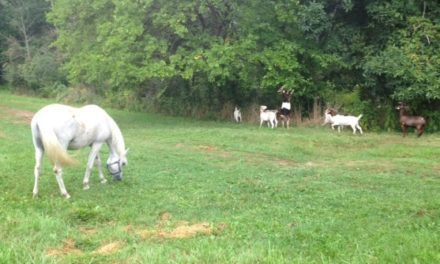 Unwelcome Horse Pasture Plants Got Your Goat? Get a Goat!