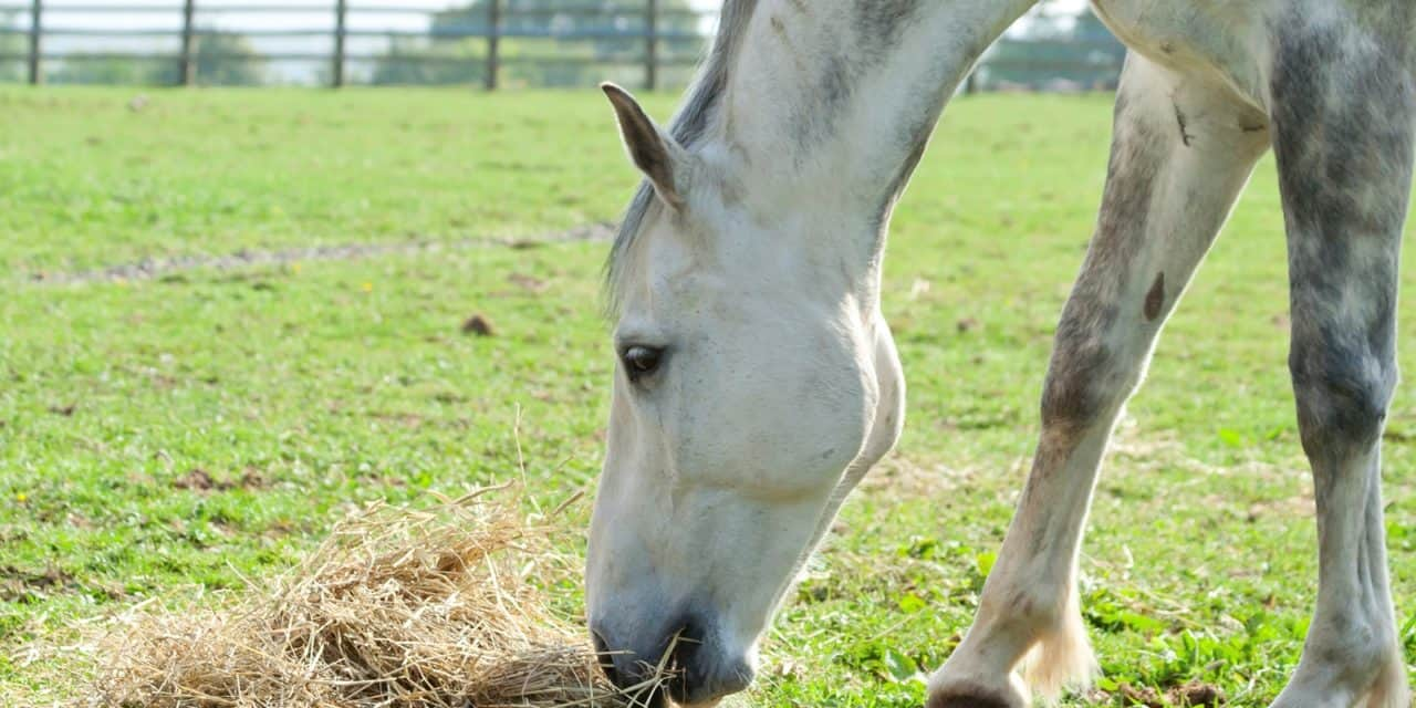 Carbohydrate Composition and Equine Digestion