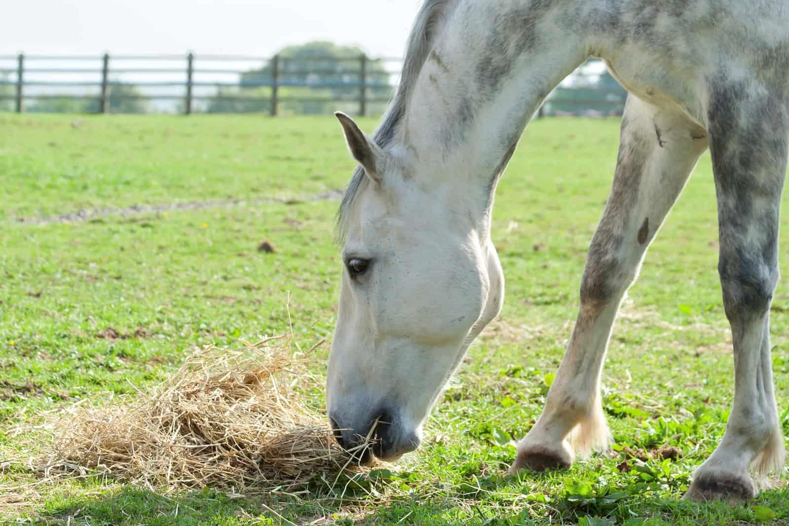 Feeding Horses During Reduced Work