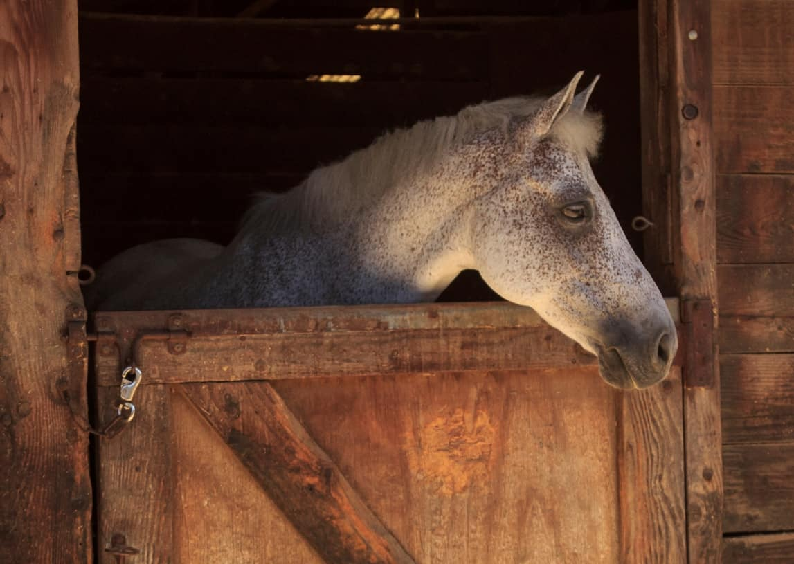 TheraPlate Might Help Minimize Muscle Loss in Horses on Stall Rest