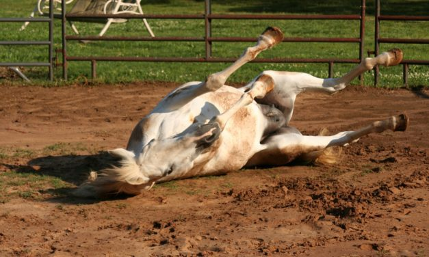 The Clinical Signs of Equine Colic