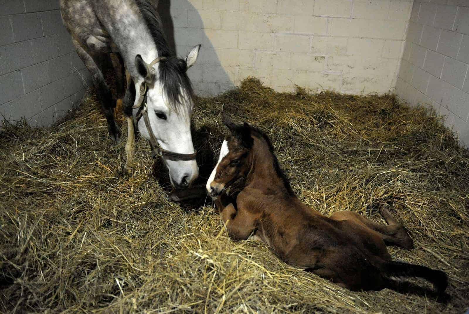 Do Probiotics Help Prevent Foal Diarrhea? - The Horse