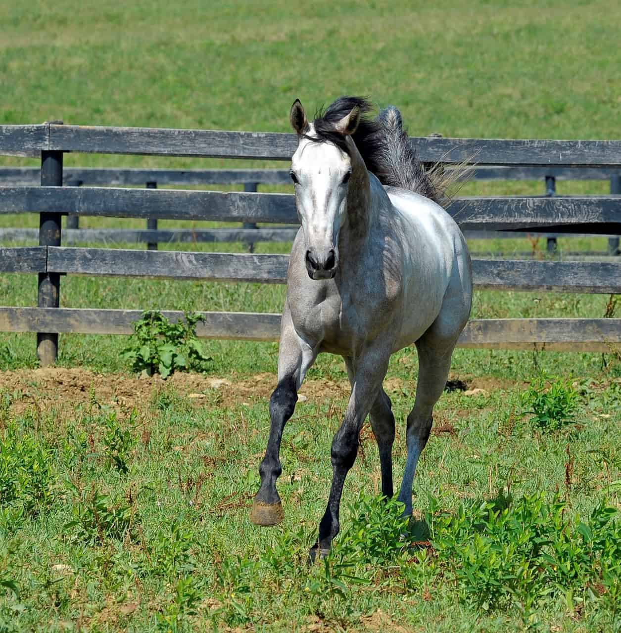 thoroughbred aftercare organizations