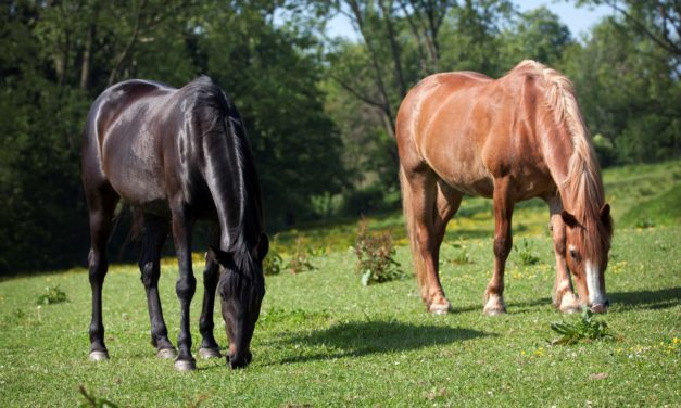 Can Nutrition Boost the Equine Immune System?
