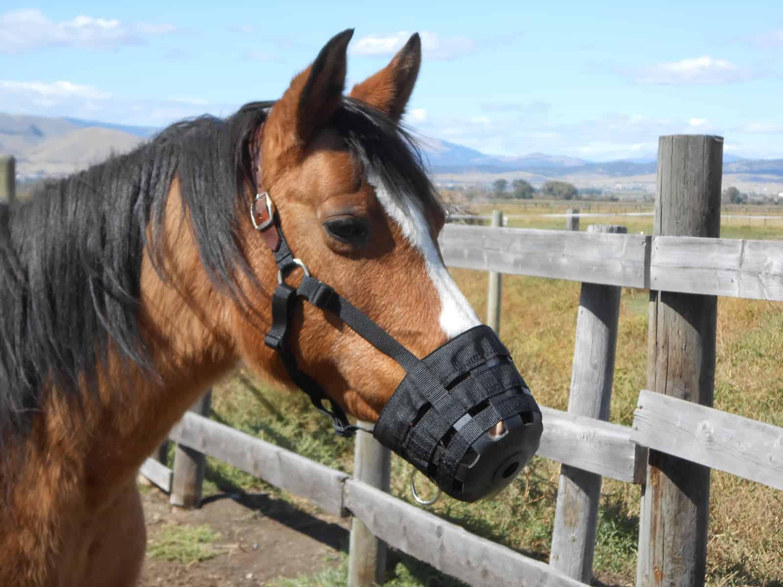 Addressing the 'Air Fern' in Your Barn