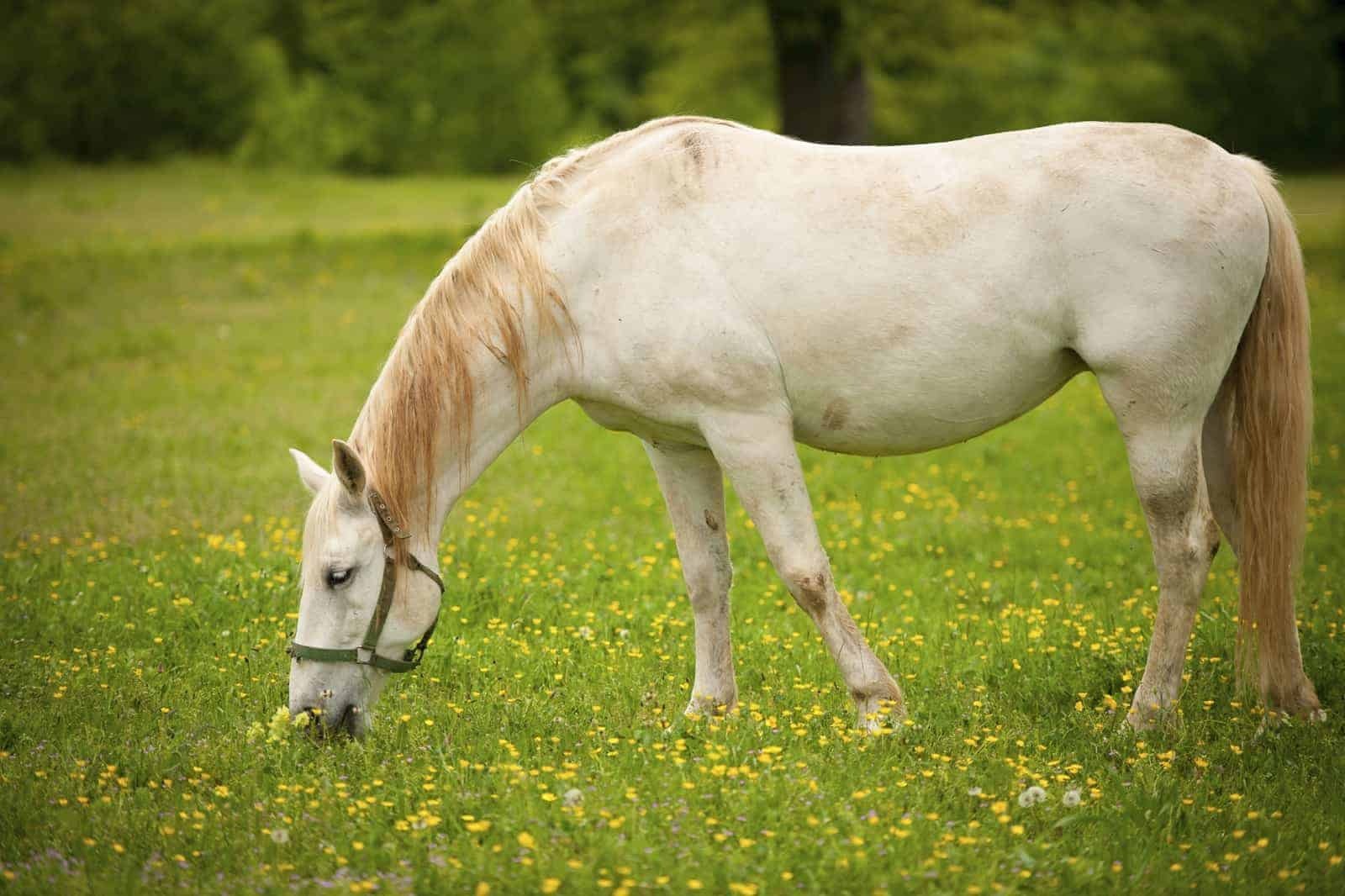 How Common are Dental Abnormalities in Horses?