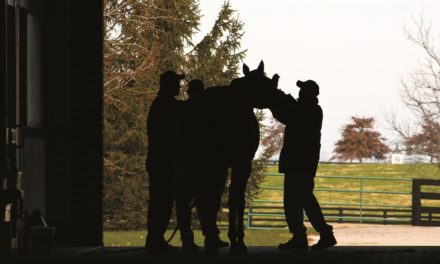 Retired Racehorses: Transitioning from Racetrack to Ribbons
