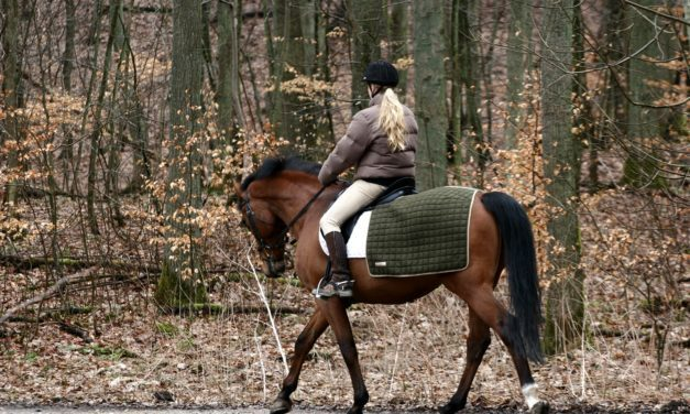 Conditioning Horses in Fall and Winter