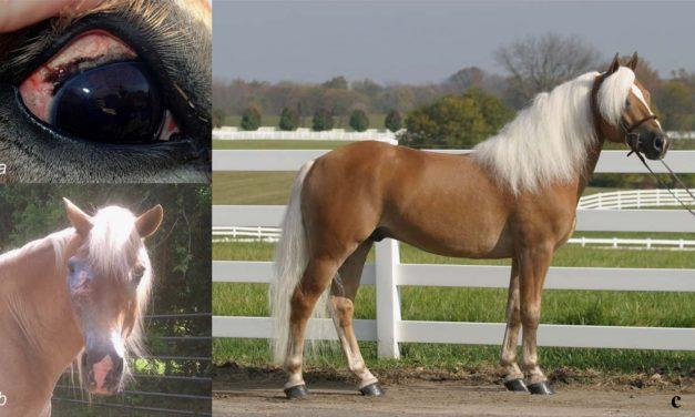 Genetic Risk Factor for Equine Eye Cancer Identified