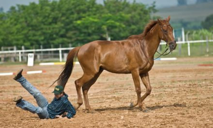 The Legalities of Equine Insurance Policies