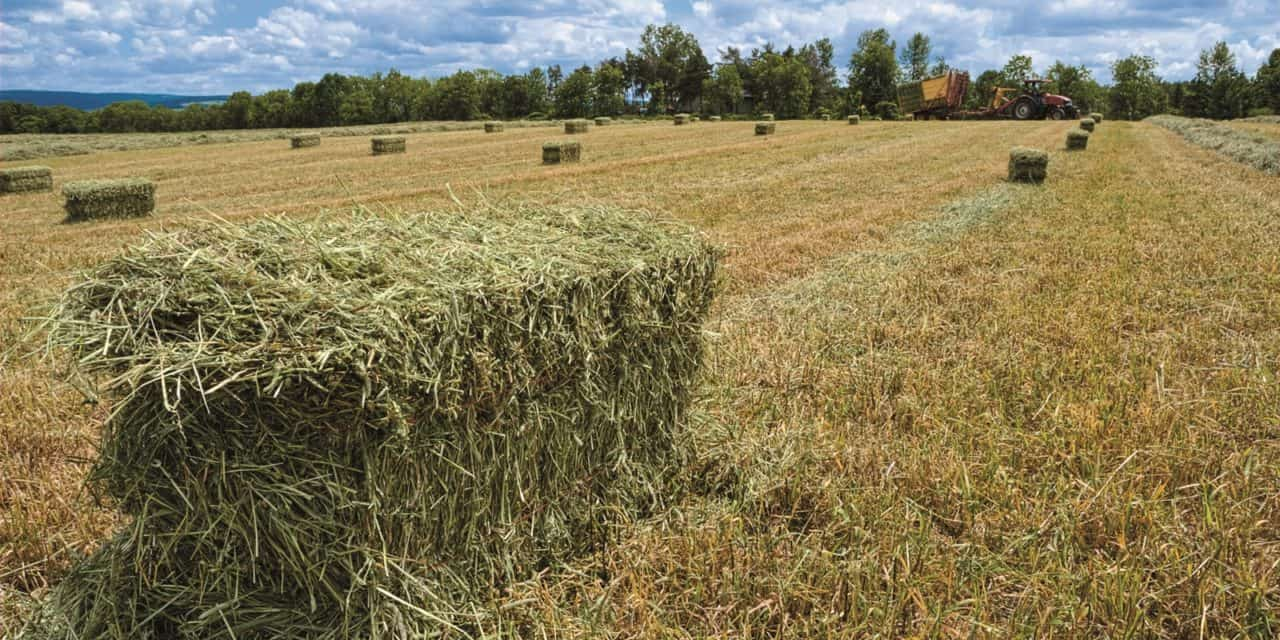Understanding Round And Square Bale Hay For Horses Part 2 The Horse - Bales