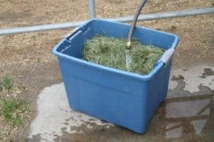 Hay soaking