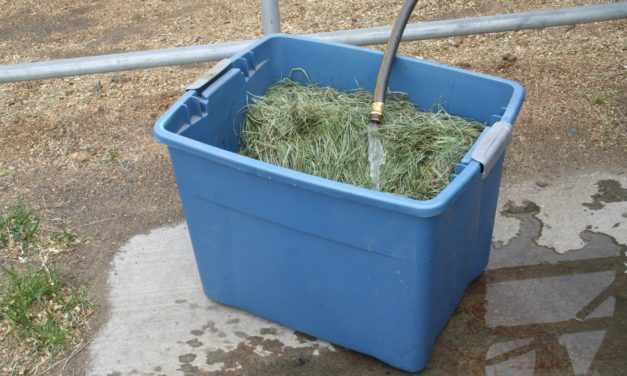 Hay Soaking Tips