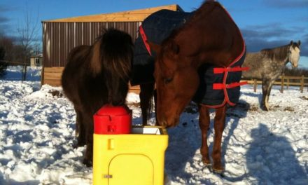 Reducing Winter Colic Risk in Your Horse