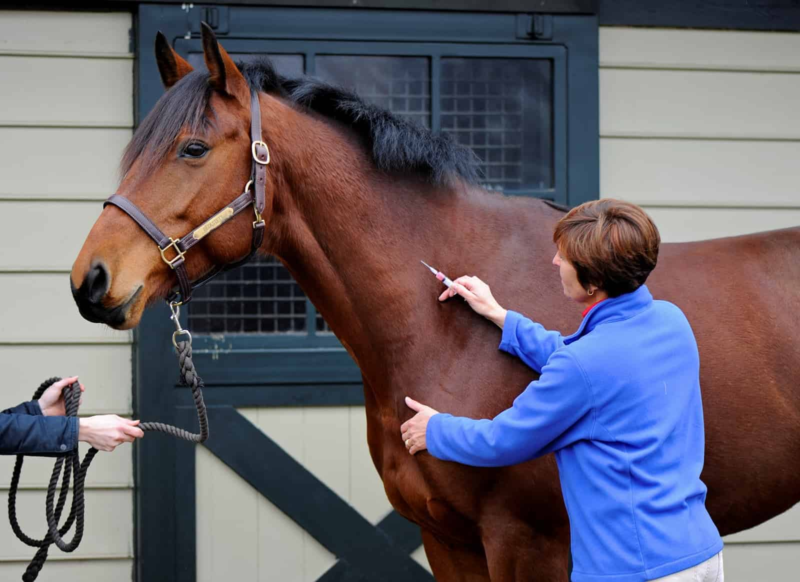 Equine Vaccination Q A The Horse