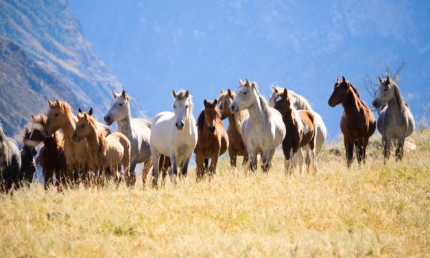 Lawmakers Seek Funding Ceiling, Clarity on BLM Wild Horse Management Plan
