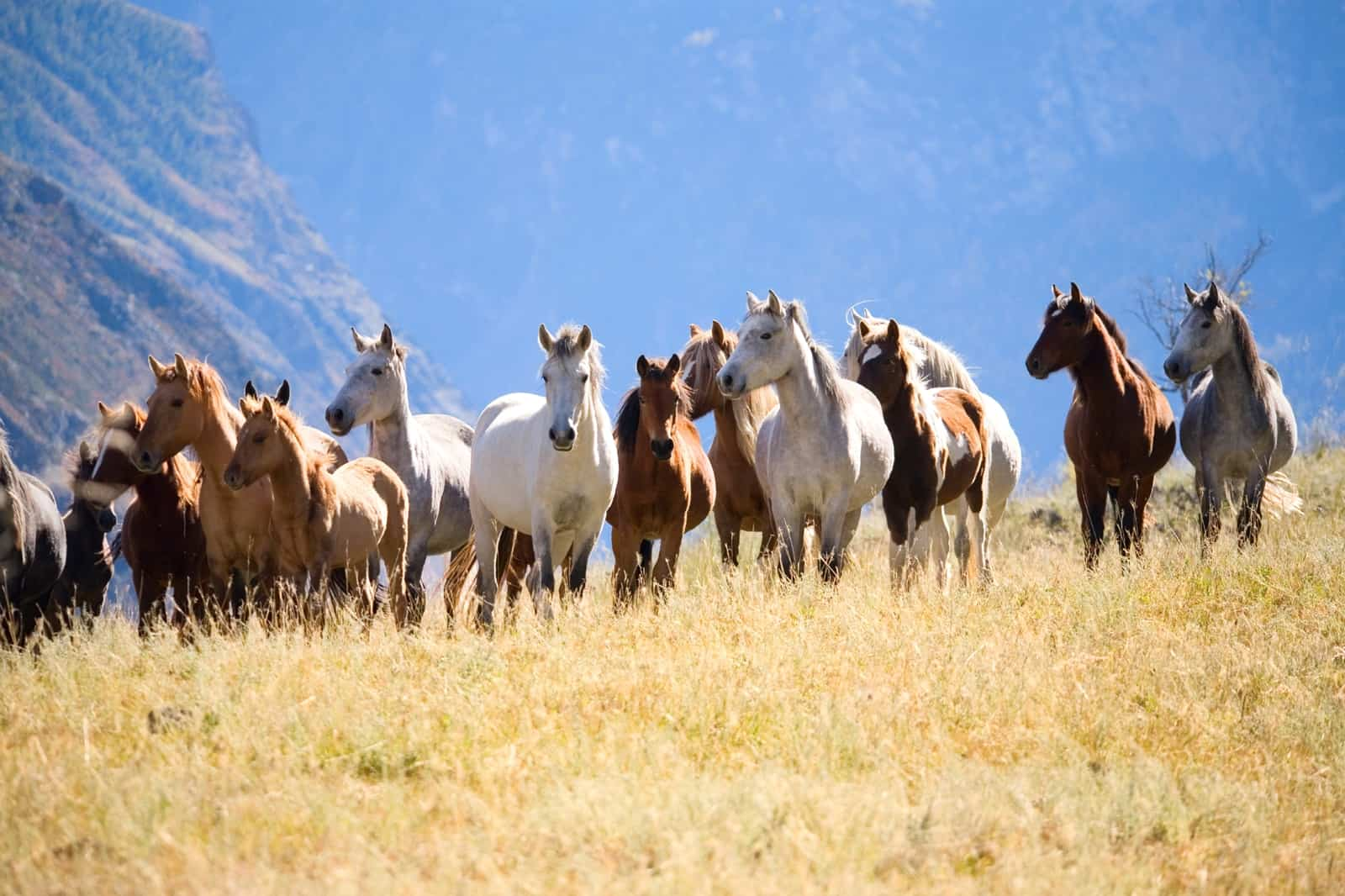 For Once Join Herd >> Understanding Herd Dynamics The Horse