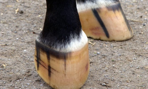 Is the Hoof Smart? Adaptability of the Equine Foot