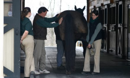Stifling the Pain in Horses