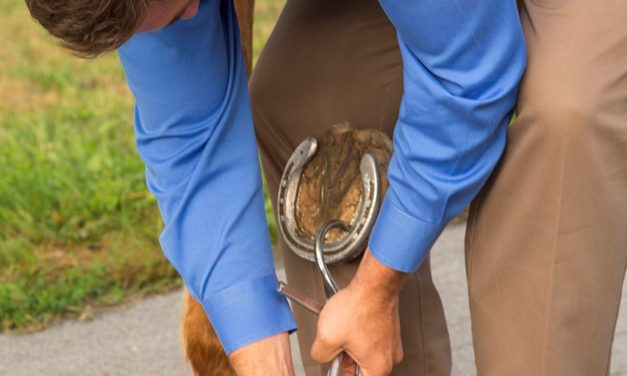 Managing Equine Foot Pain