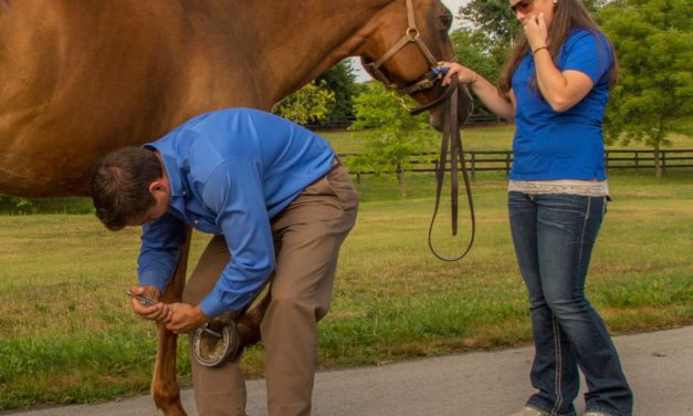 Trouble's Afoot: Signs Your Horse Has a Hoof Problem Brewing