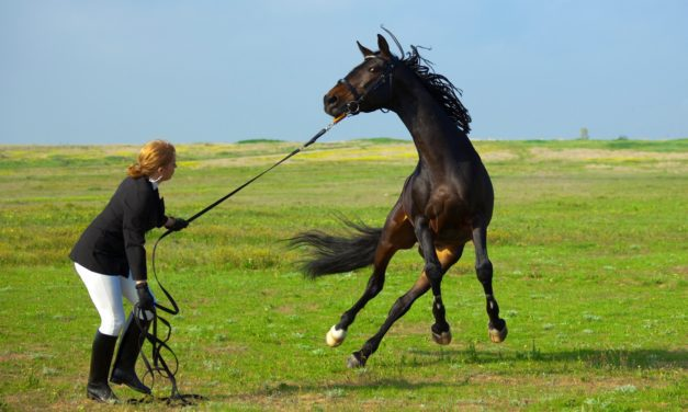 Is Your Horse Stressed Out at Shows? Get 13 Tips to Help