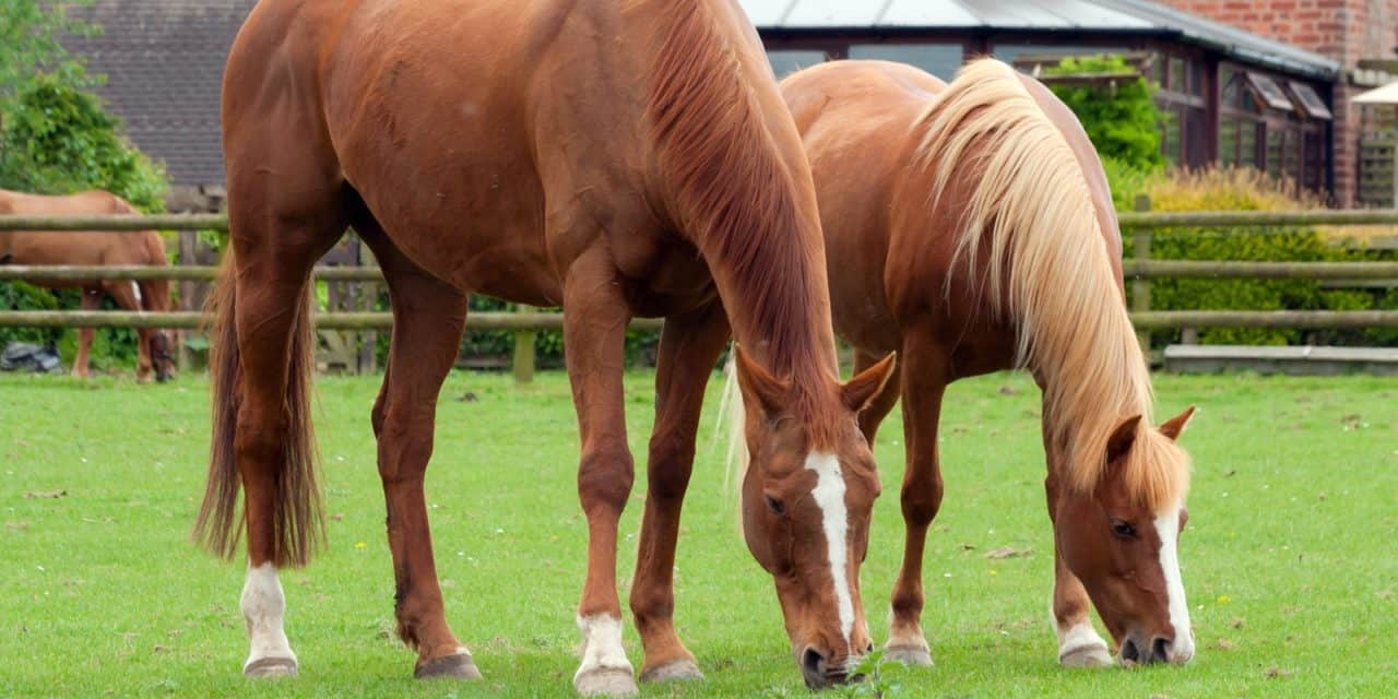 Insulin Sensitivity Compared Among Breeds The Horse