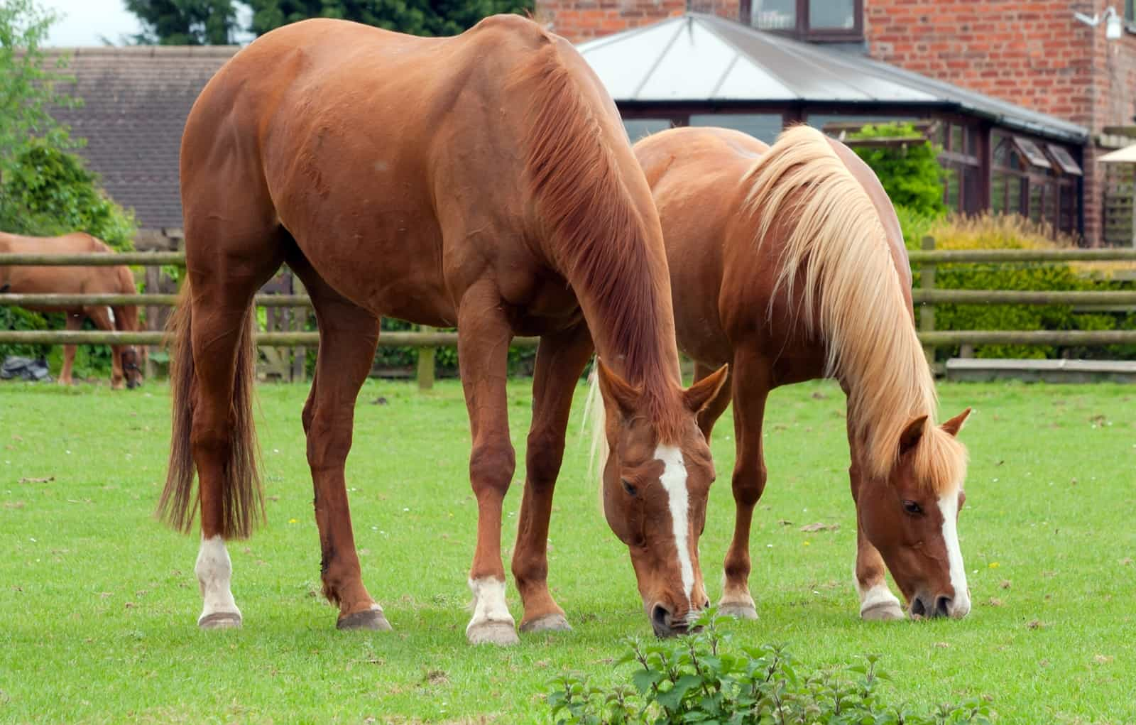 Journey Through the Equine GI Tract